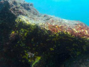 coral de agua fría